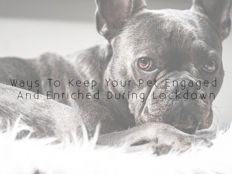 Ways To Keep Your Pet Engaged And Enriched During Lockdown