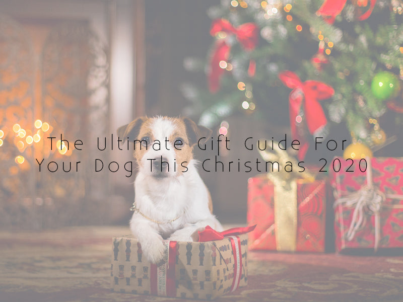 The Ultimate Gift Guide For Your Dog This Christmas 2020