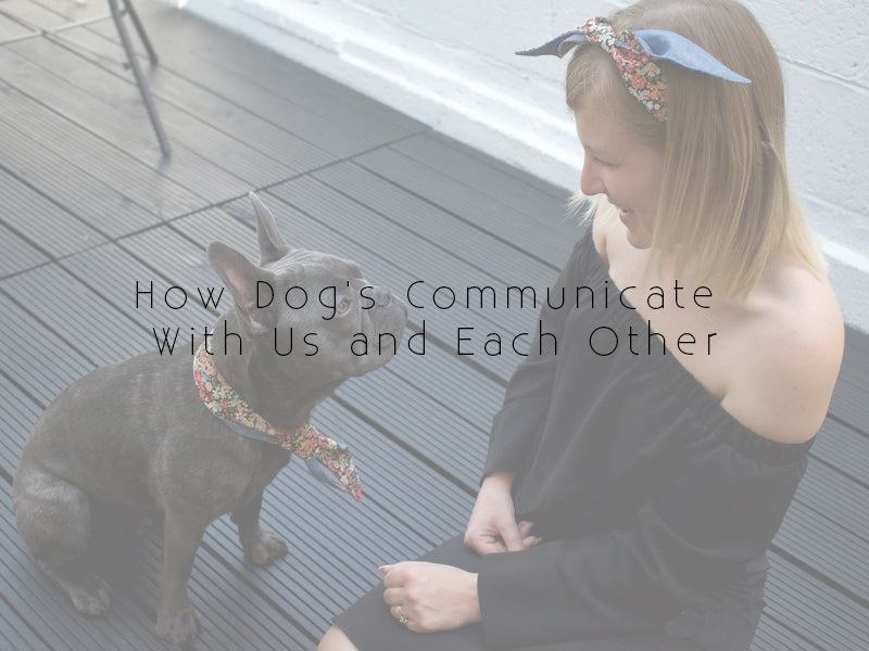 How dog's communicate with us and each other
