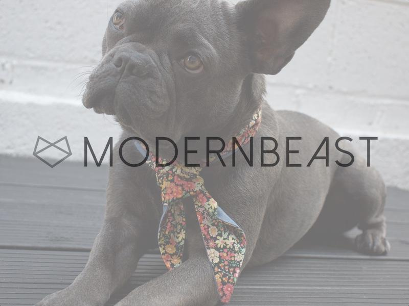 An interview with MODERNBEAST - Contemporary Designer Dog Accessories
