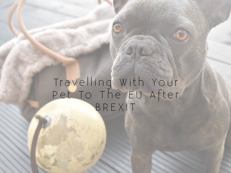Travelling With Your Pet To Europe Post Brexit