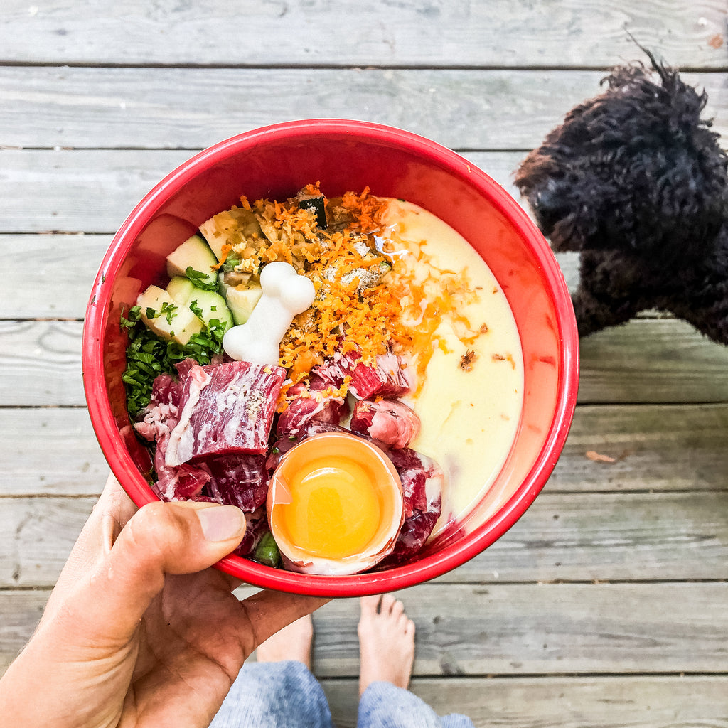 how a dogs diet can help prevent cancer