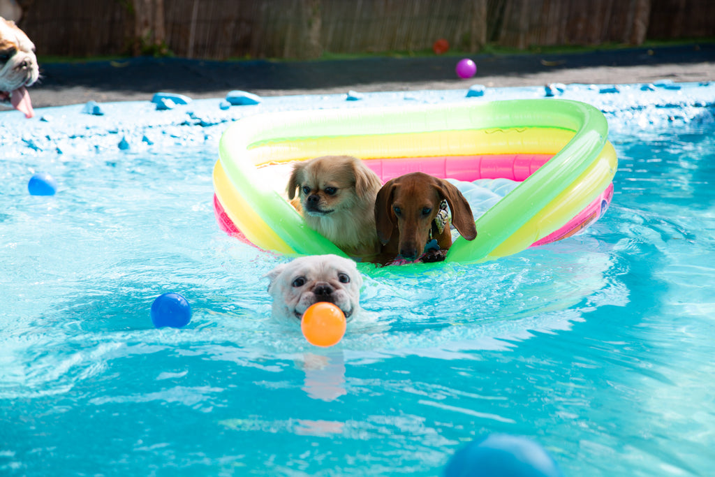can dogs swim