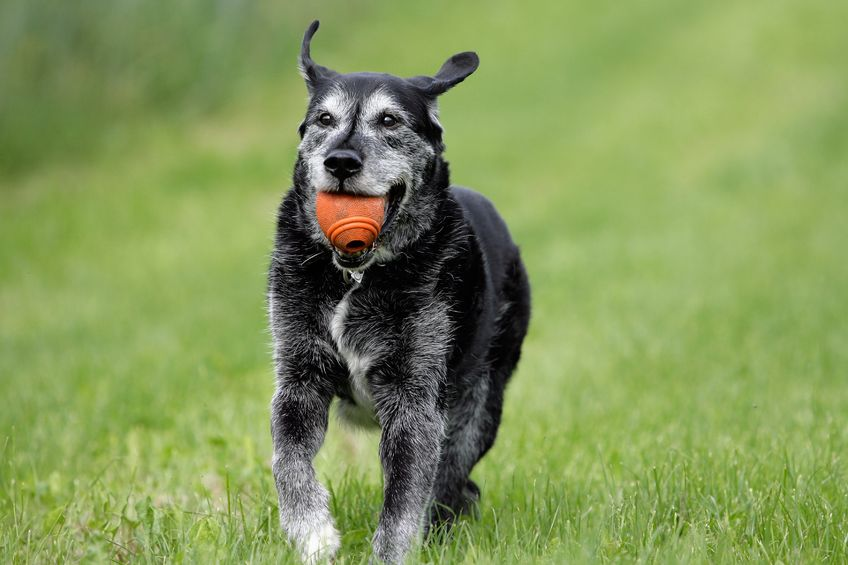 excercise for older dogs