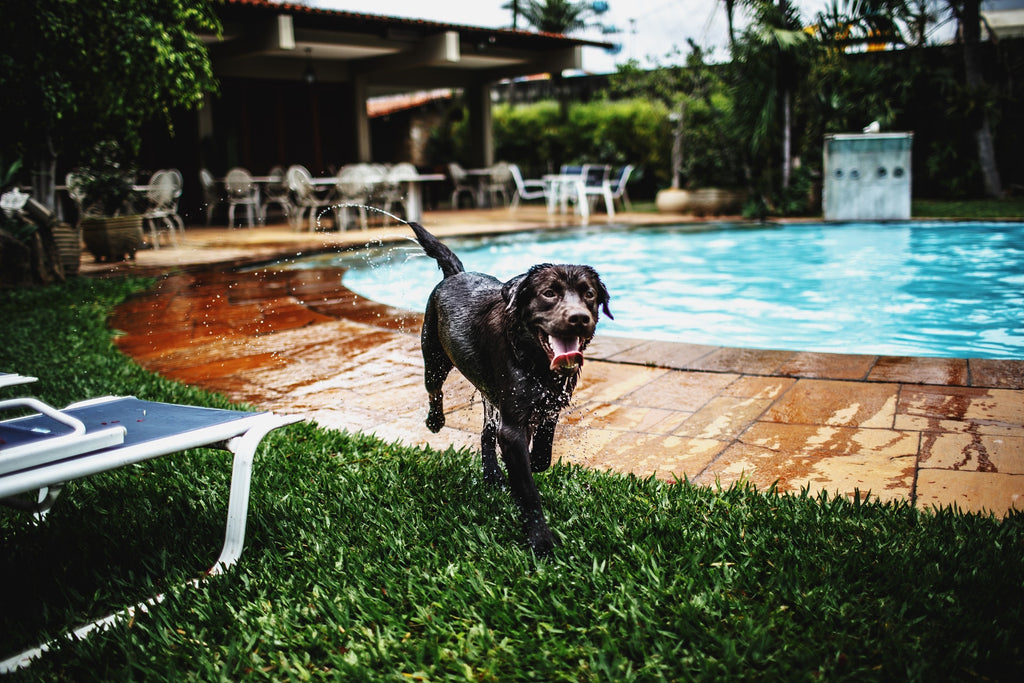 ways to keep your dog cool