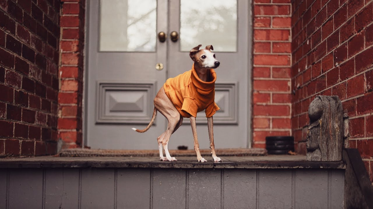 Aurora Pets   Luxury Accessories and Designer Apparel for Dogs