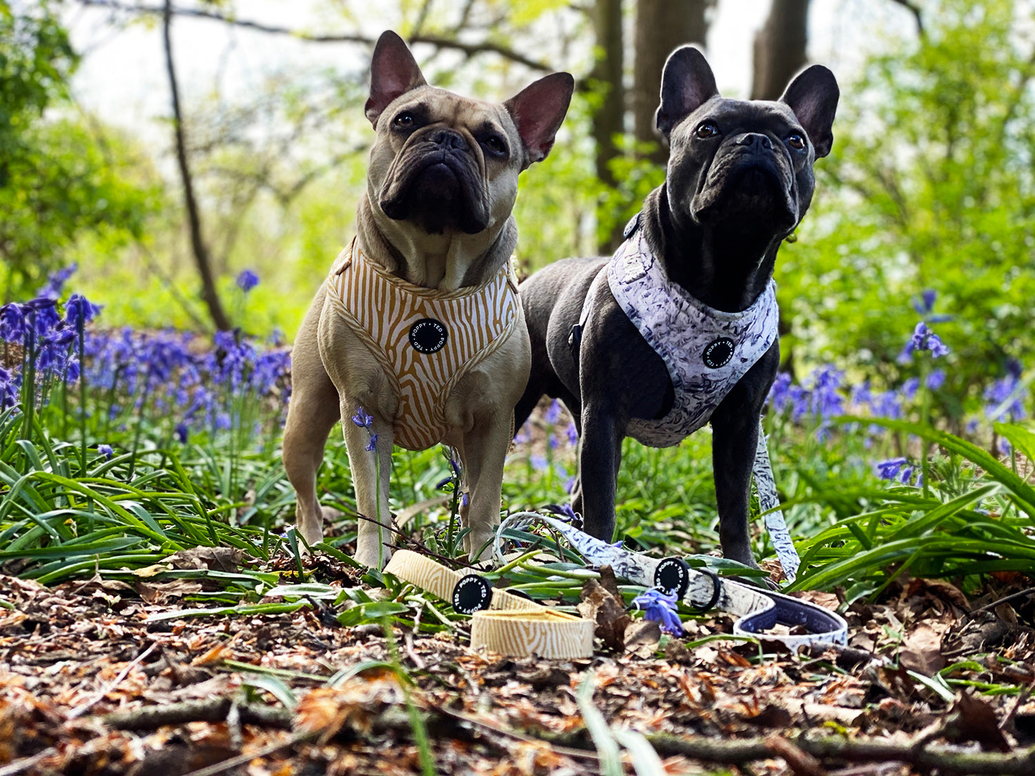 poppy and ted stylish dog accessories