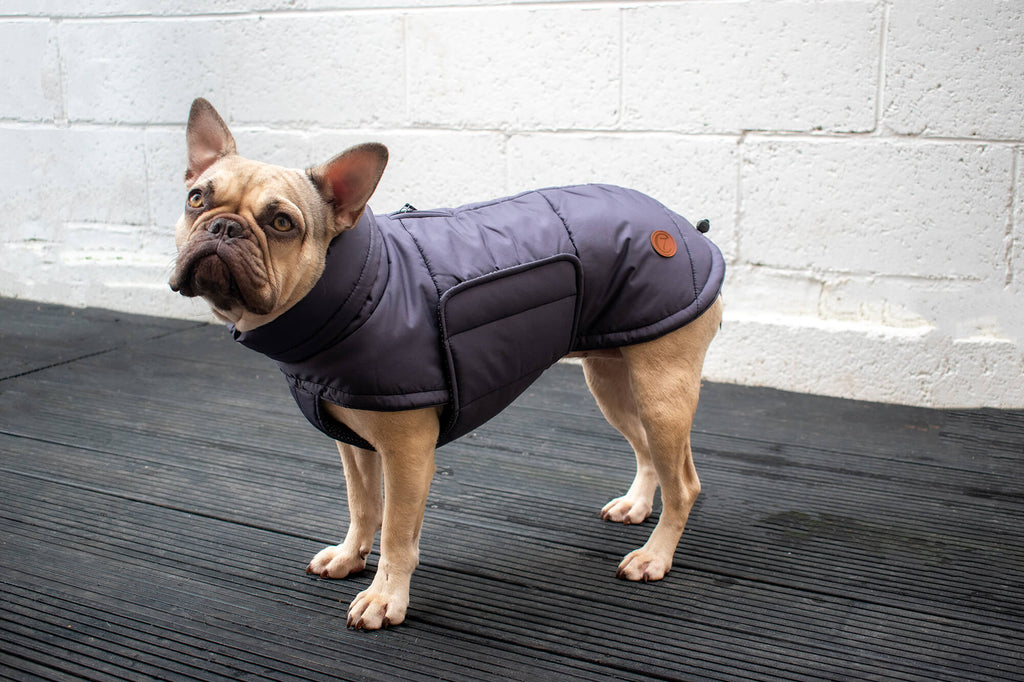 French bulldog coat
