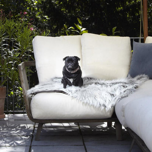 white and black dog blanket