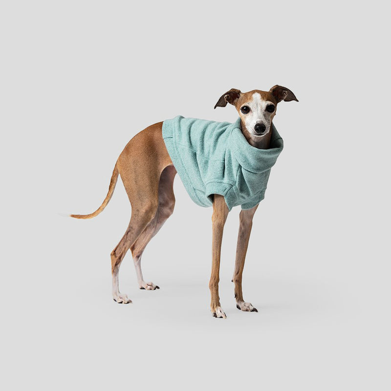 blue jumper for dogs and puppies