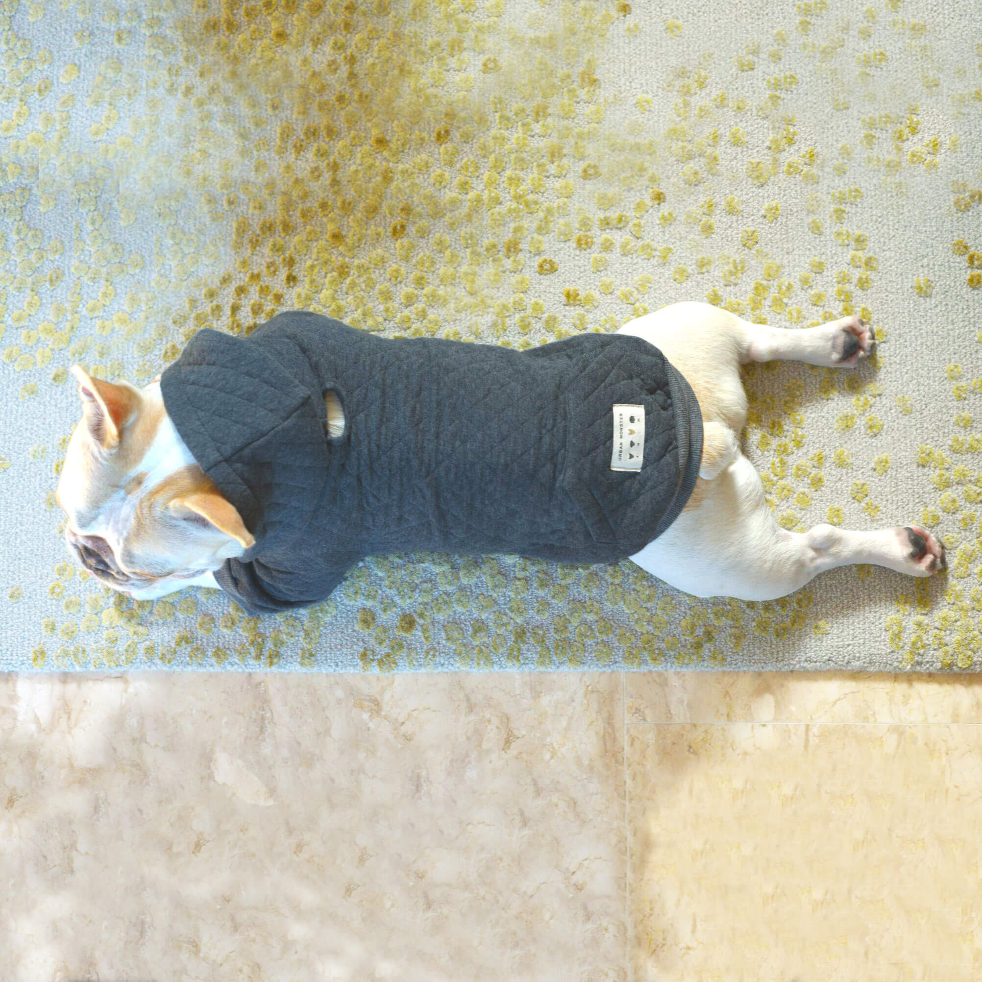 hoody for french bulldogs