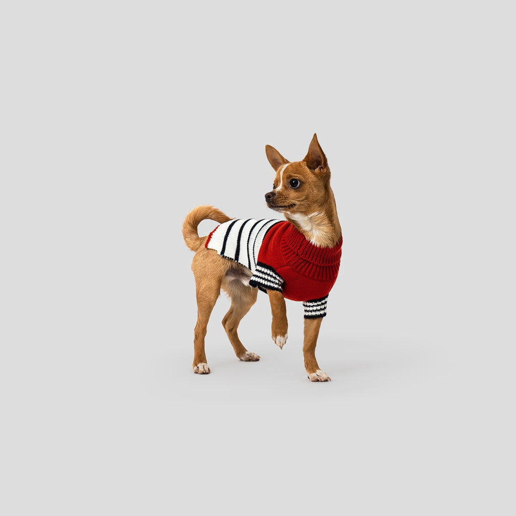 Designer dog jumper