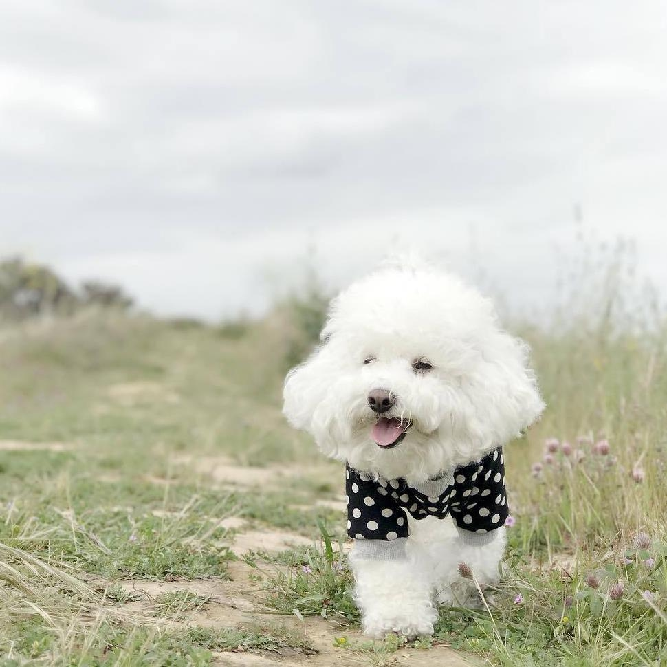 designer clothes for maltipoo