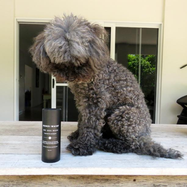 waterless dog shampoo