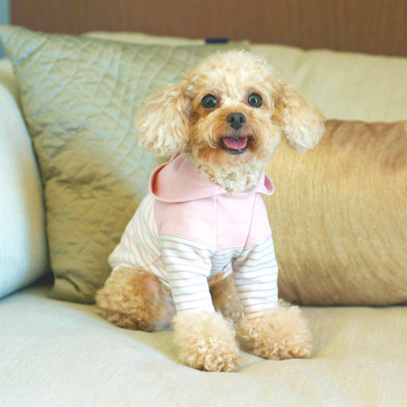 designer apparel for small dogs