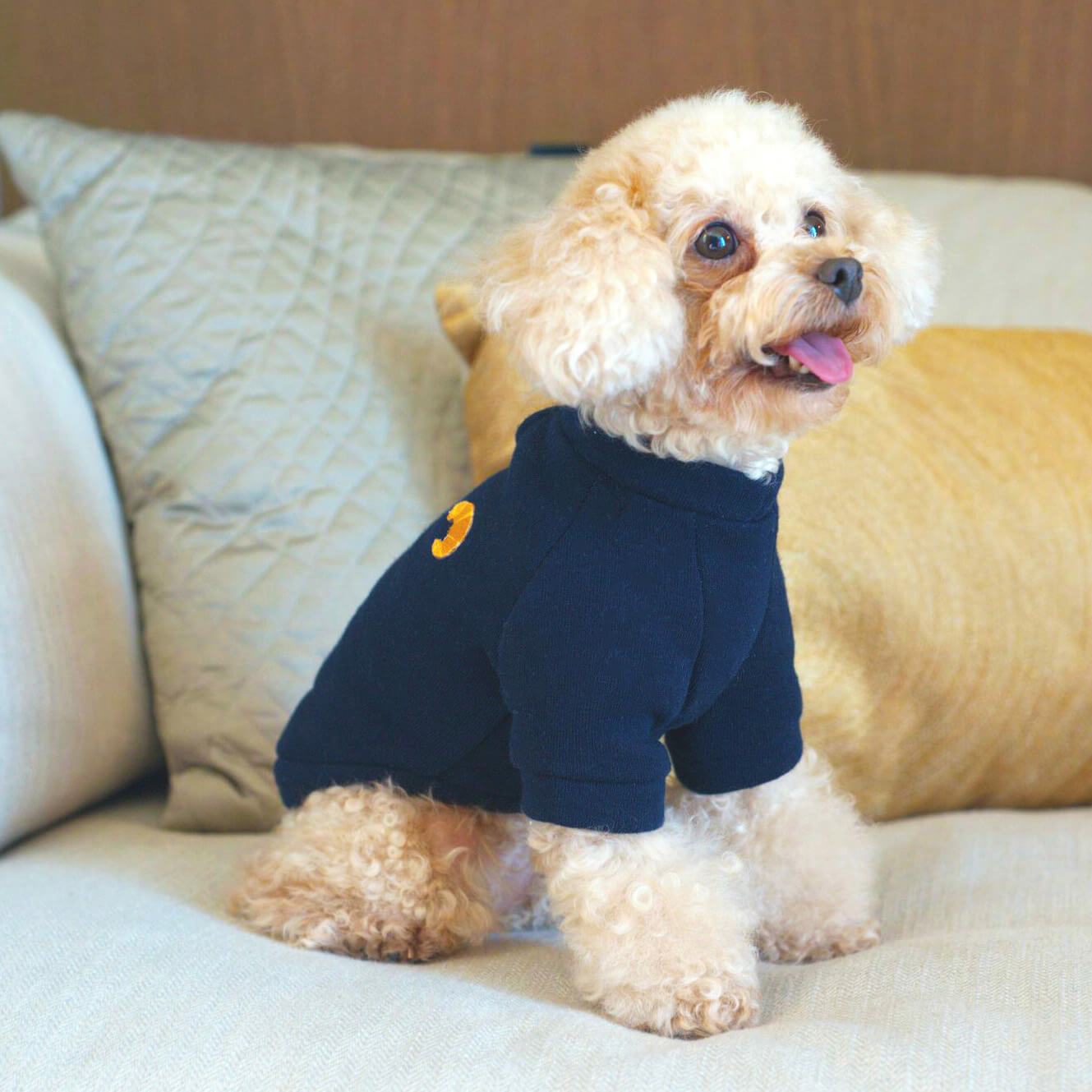 designer clothing for small dogs