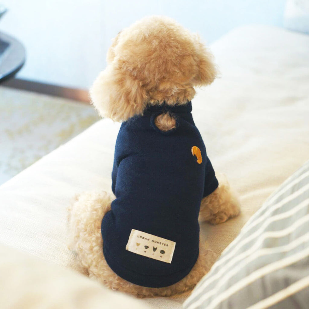 smart dog jumper