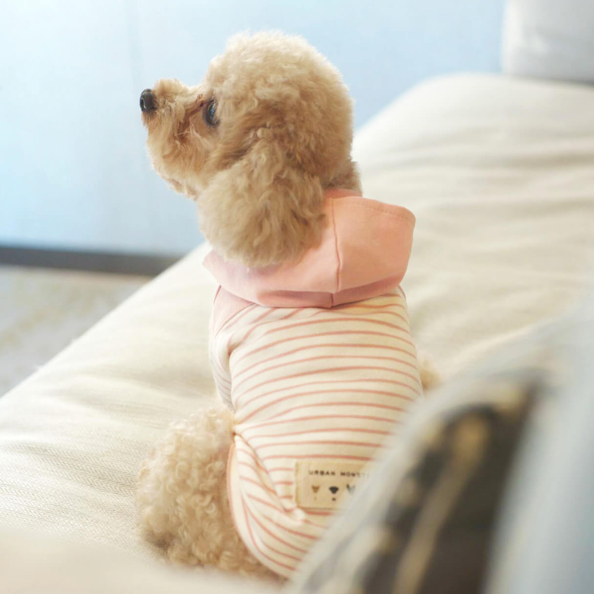 designer apparel for puppies