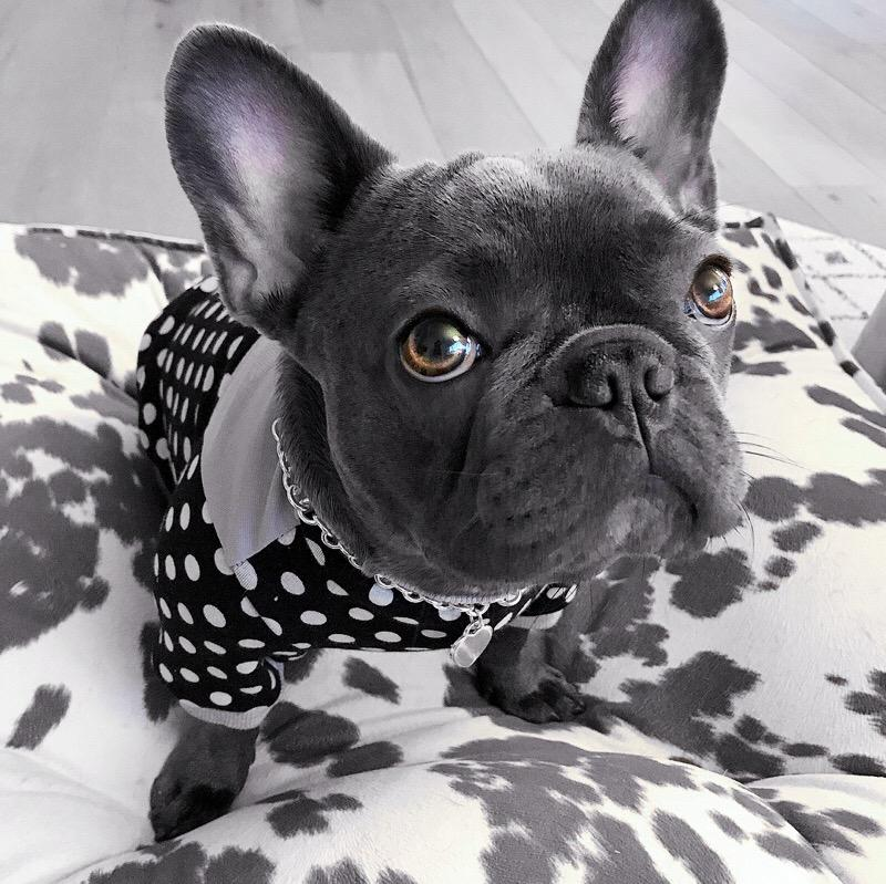 polkadot designer dog sweater