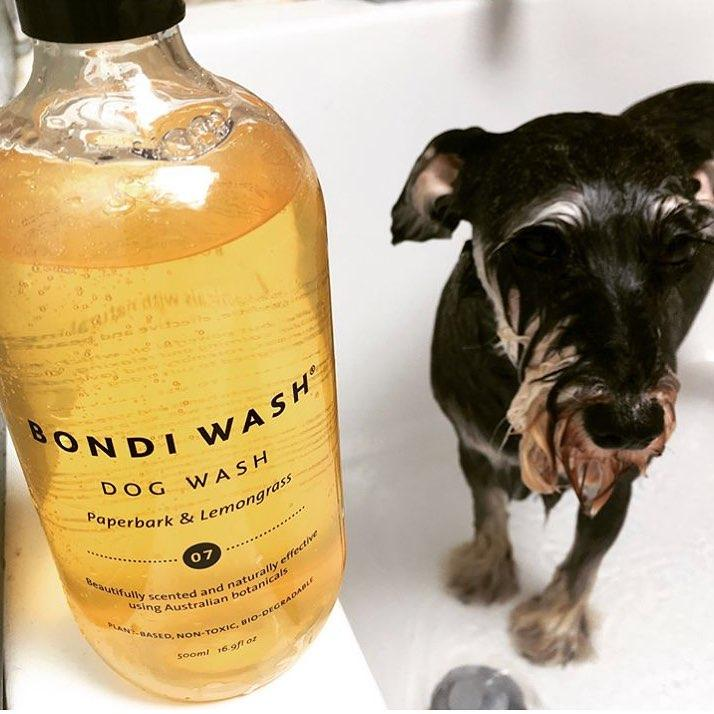 best smelling dog wash