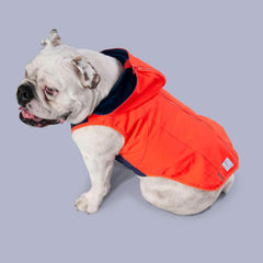 designer red jacket for dogs
