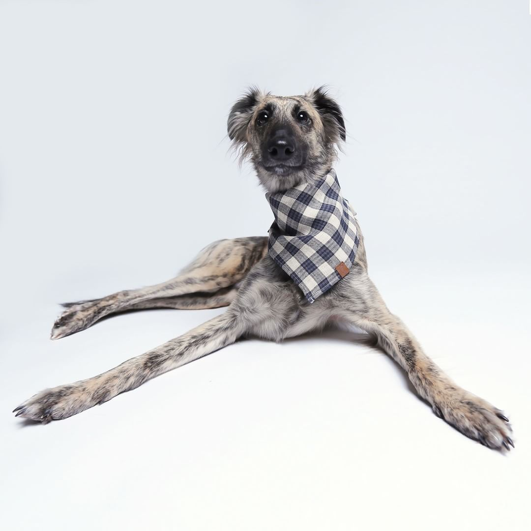 boys dog bandana