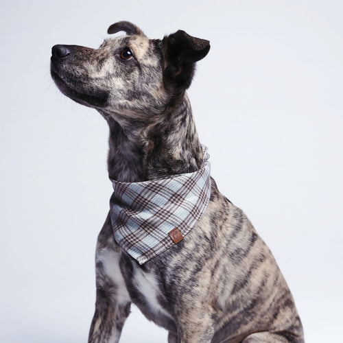 designer brown check dog bandana