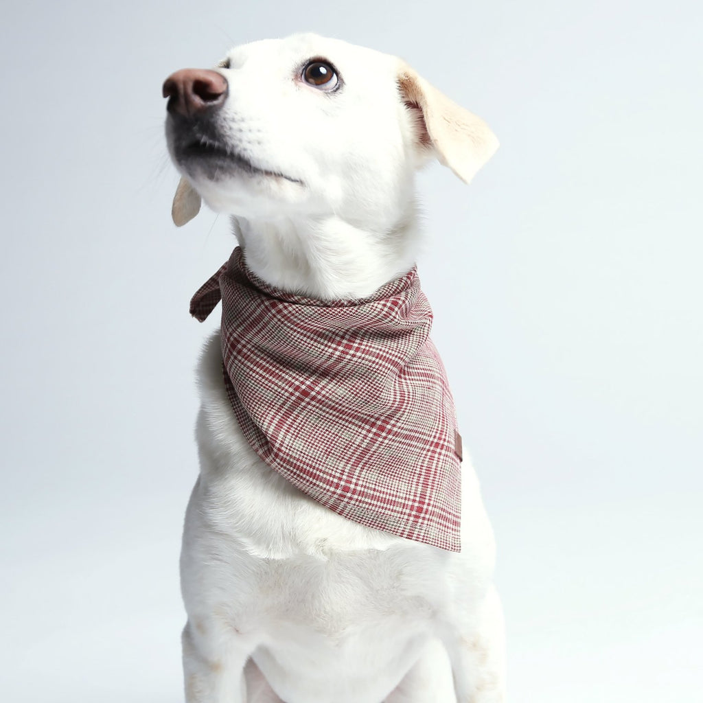 red and green check dog bandana