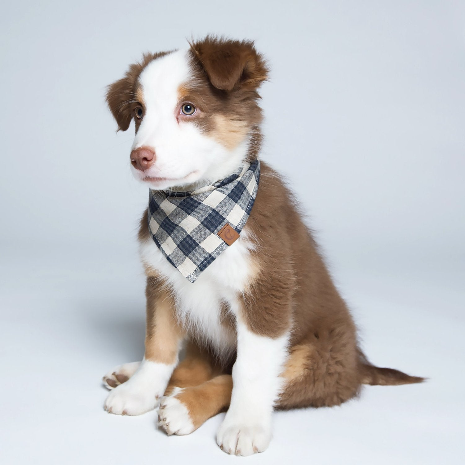 cute dog bandana uk