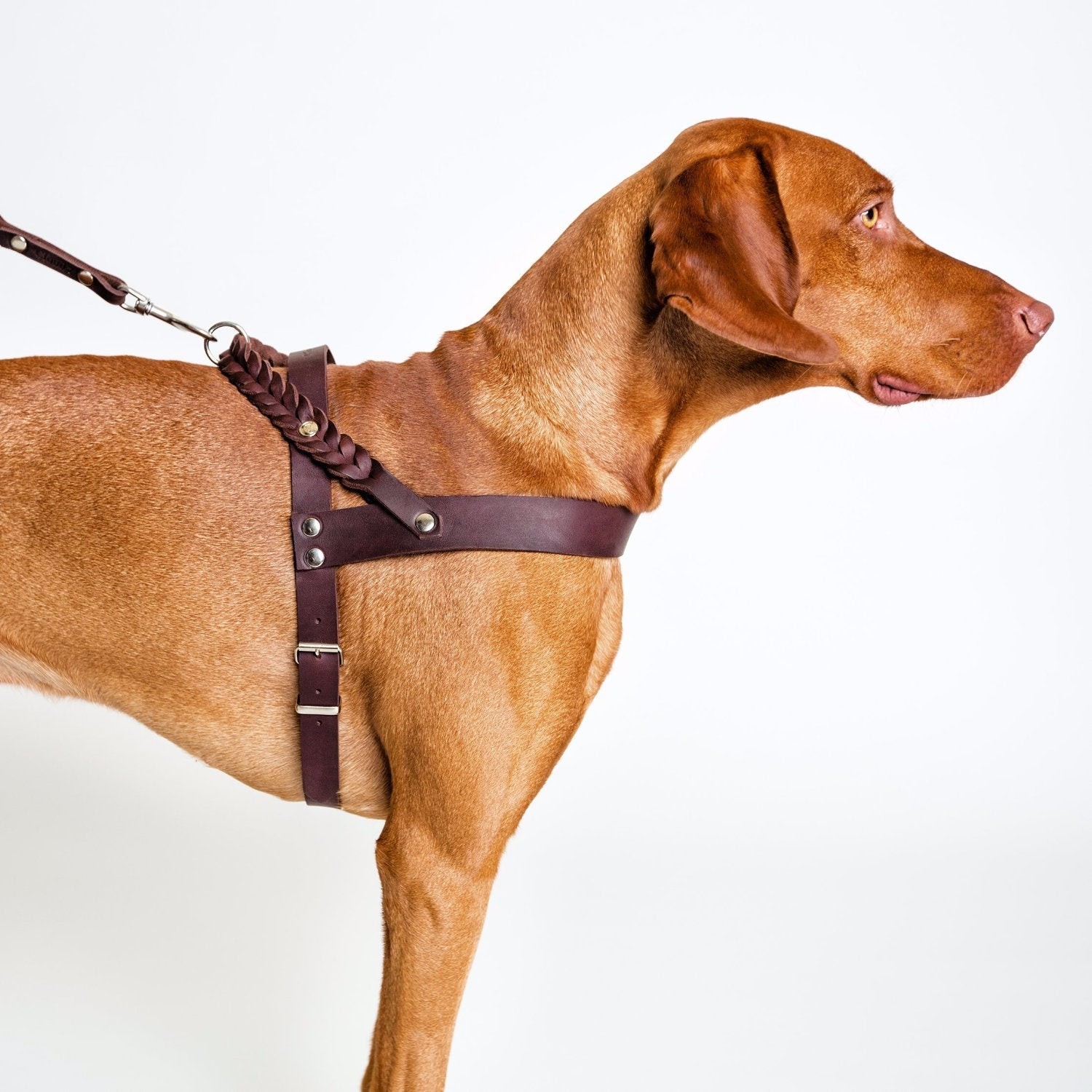 luxury leather harness for dogs