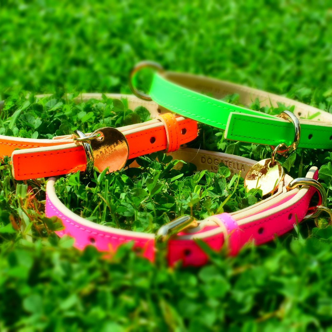 green designer dog collar