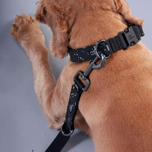 stylish black dog leash