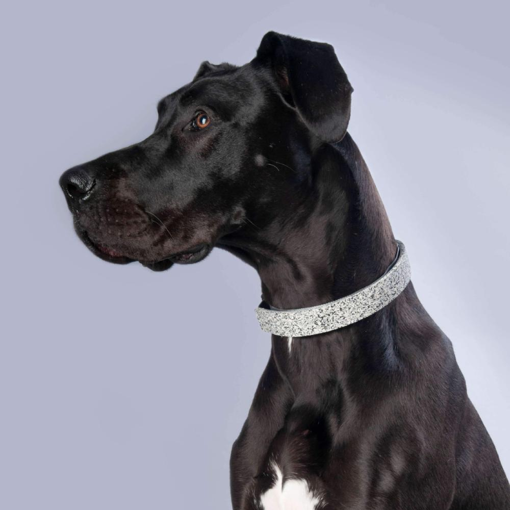 funky dog collar uk