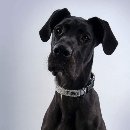 Designer grey dog collar