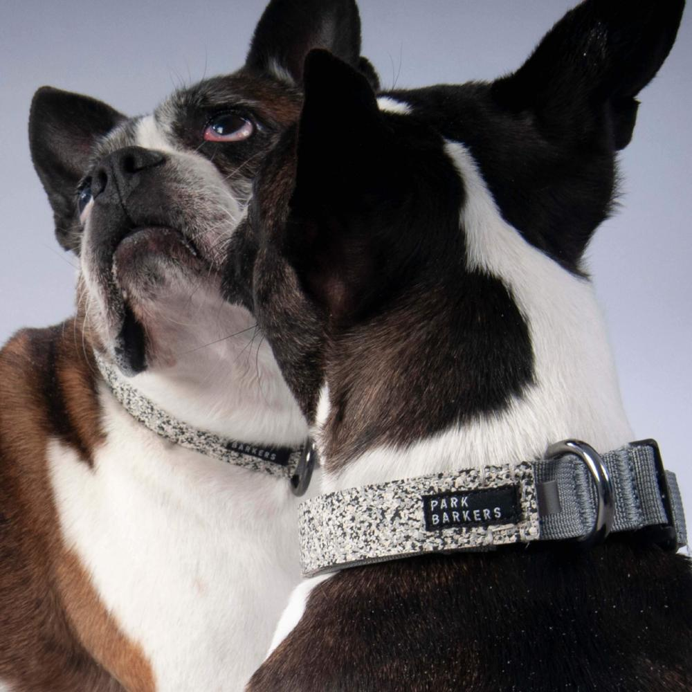 best dog collar for large breeds