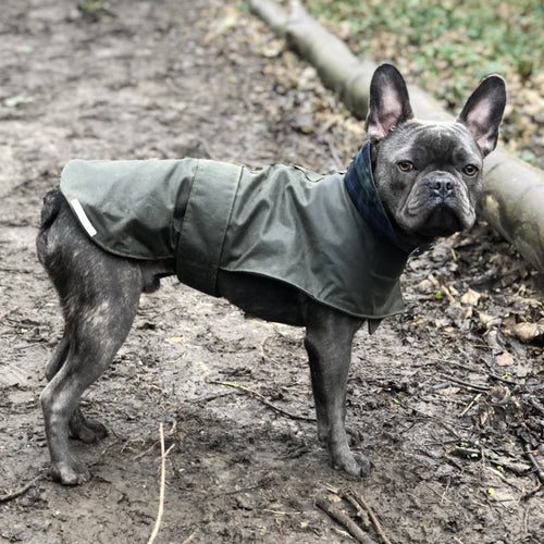 rainproof dog jacket