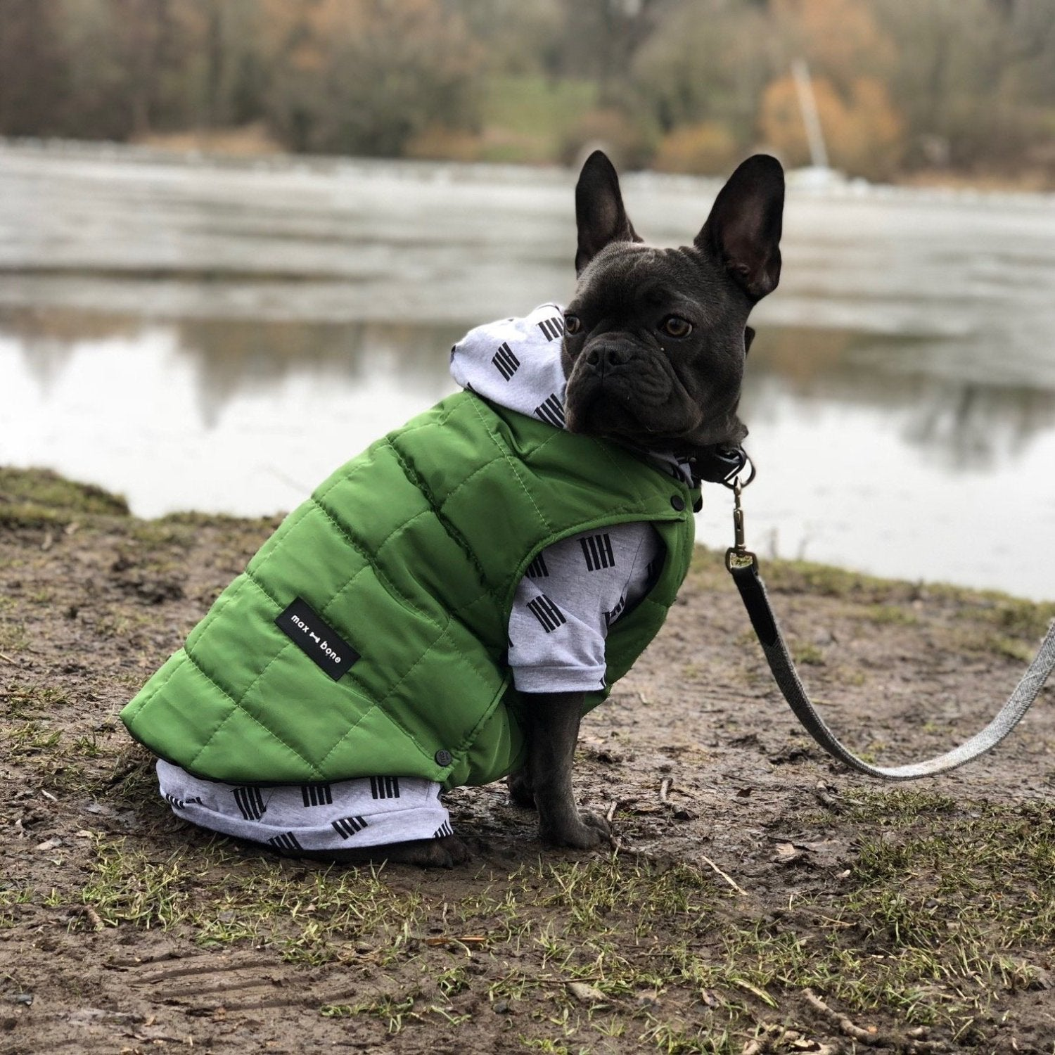 designer dog puffer coat