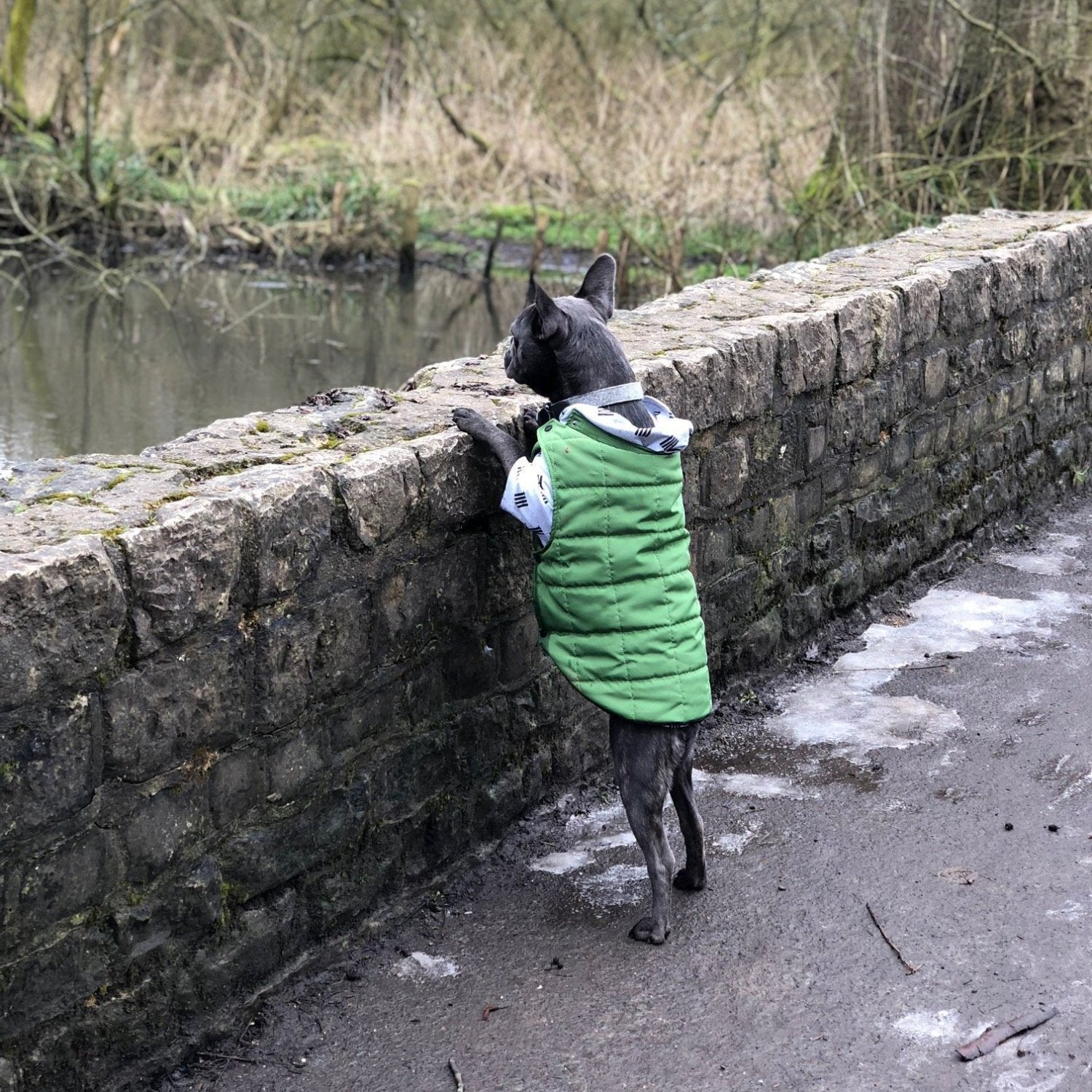 puffer coat for dogs
