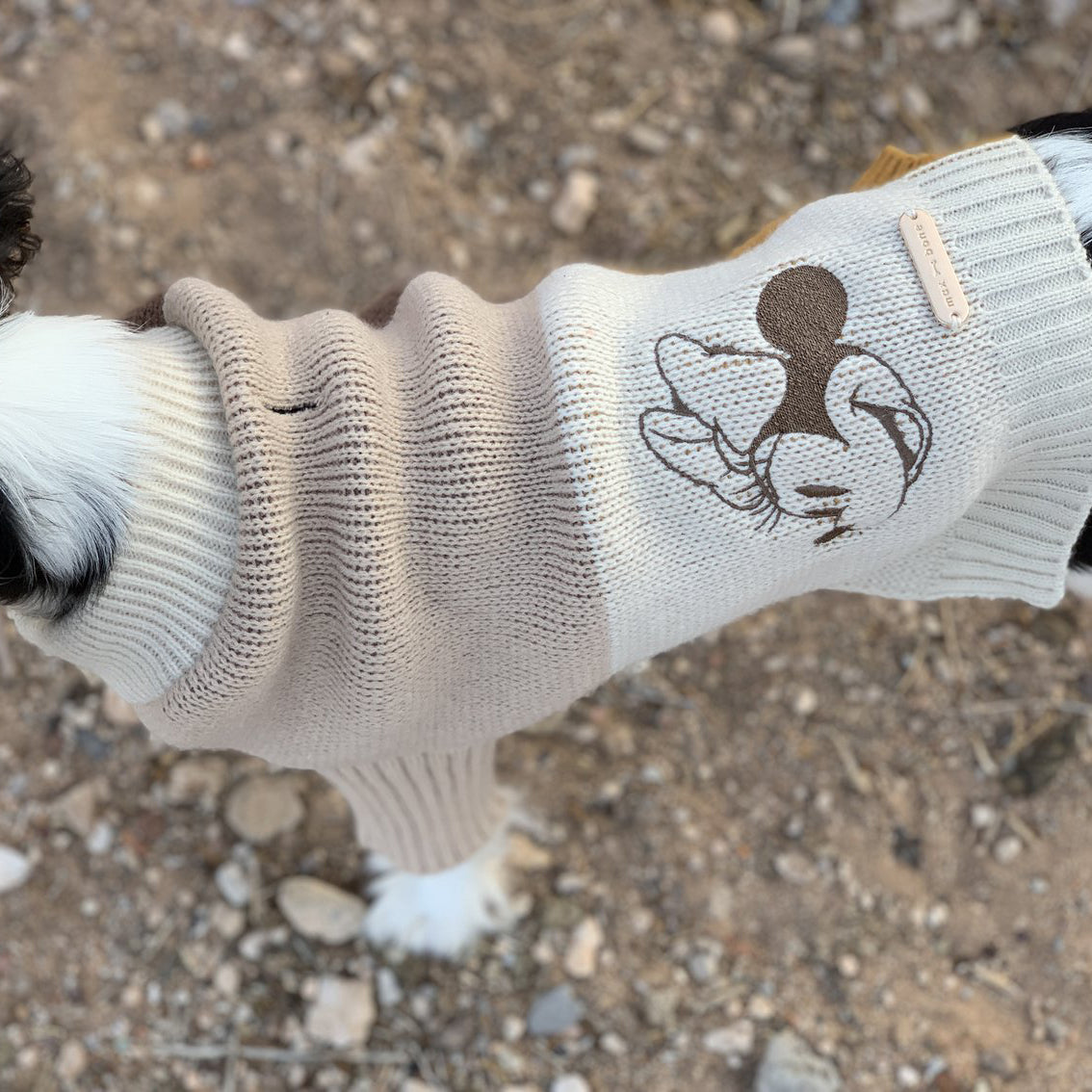 cute girl dog jumper