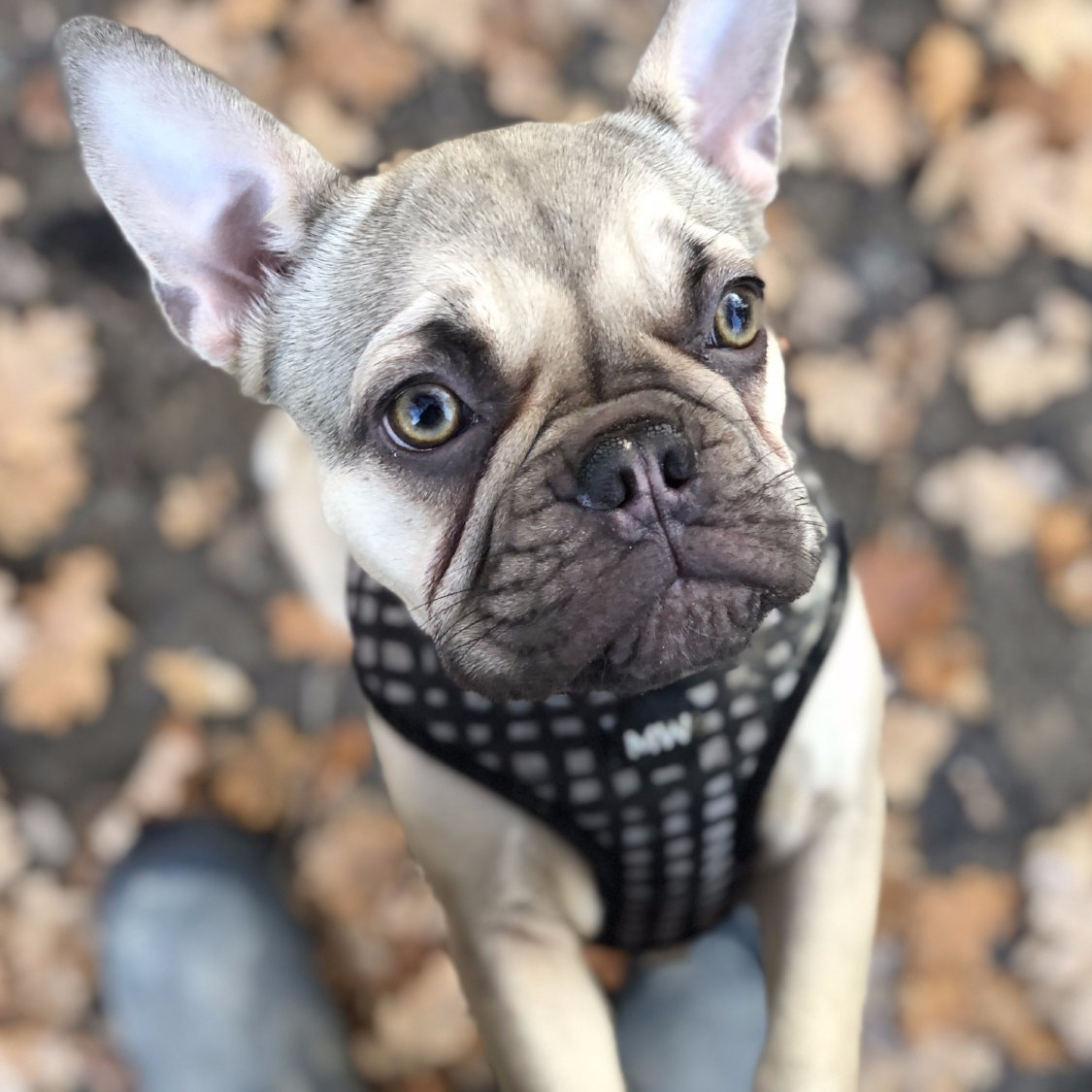 best soft material harness for dogs