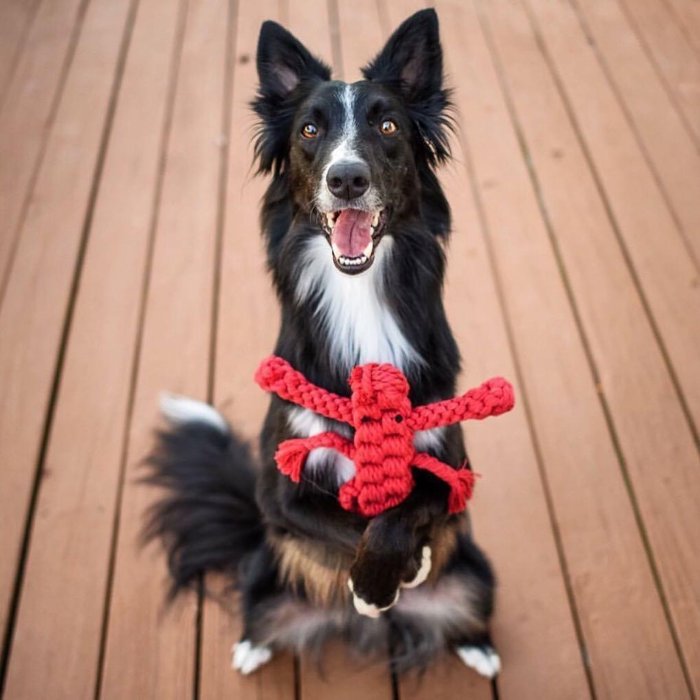 best dog toy gift for dogs on valentines day