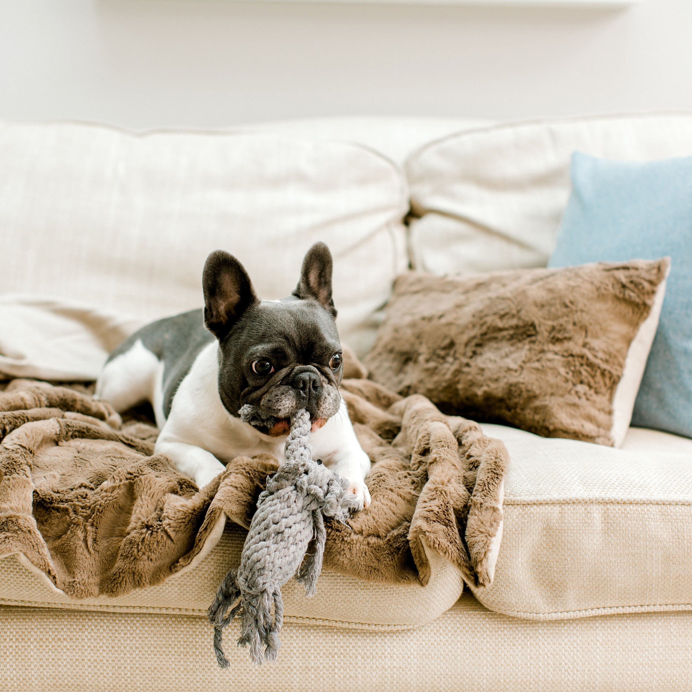Pippa & Co Luxury Dog Blanket - Oatmeal