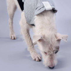 vegan leather dog coat