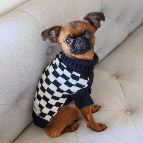 designer dog apparel uk