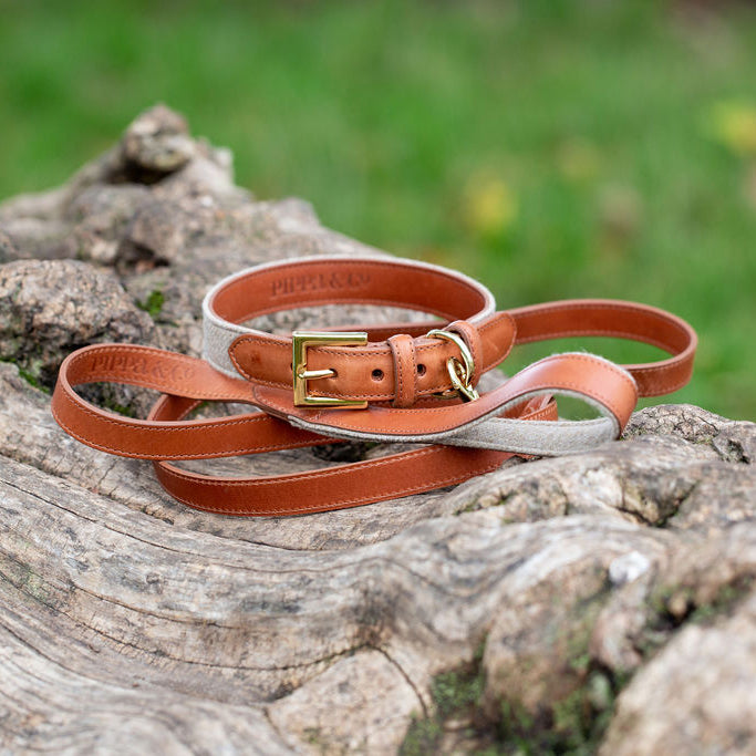 Luxury Dog Collar UK