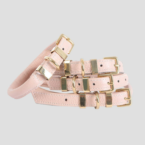 Teddy Maximus Pink Champagne Leather Dog Collar