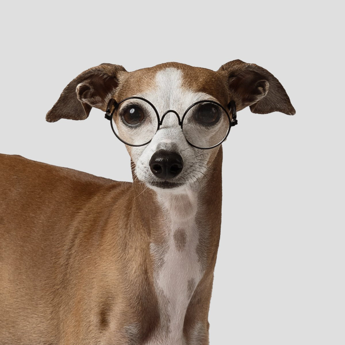 harry potter glasses for dogs
