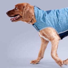 boys dog coat