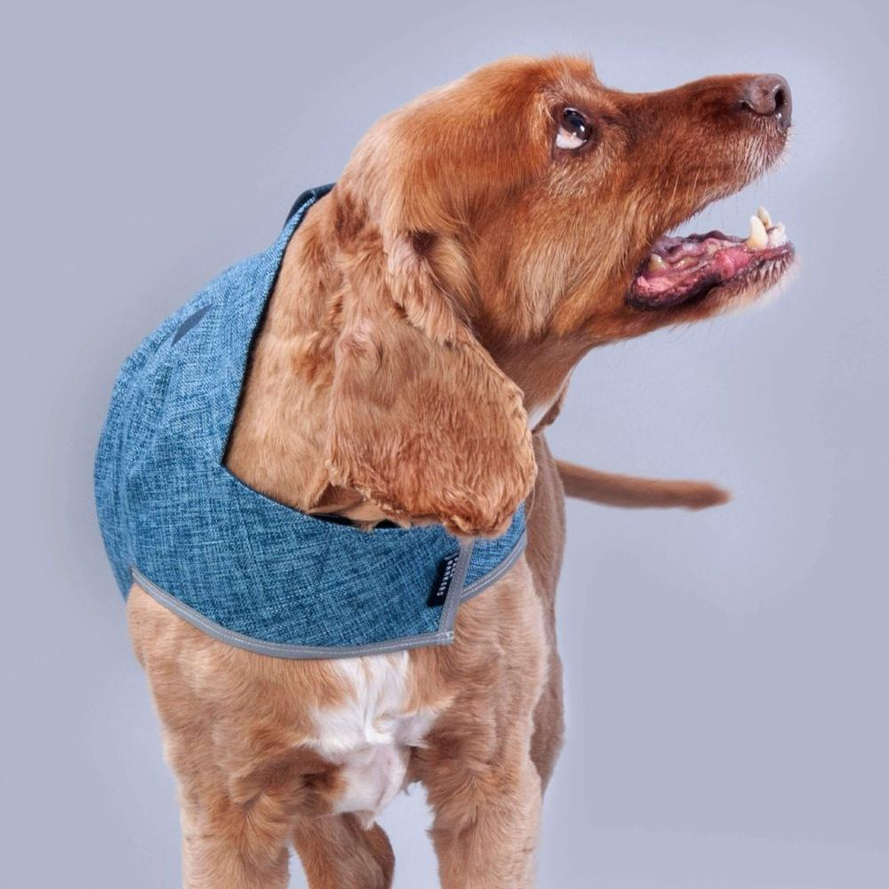 designer dog coat for boys