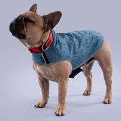 best dog coat uk